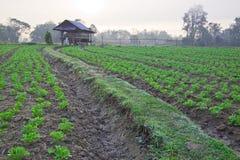 Mening van landbouwgrond op ochtend, Phrae, Thailand Royalty-vrije Stock Foto's