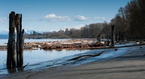 Mening van logboeken langs Fraser River, Brits Colombia royalty-vrije stock foto