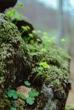 Mening van mos in het bos Royalty-vrije Stock Afbeeldingen