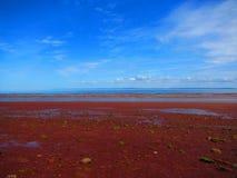 Mening van oceaan en rood zand op seafloor stock afbeelding