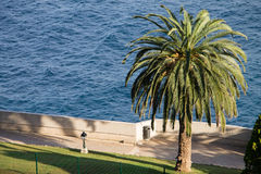 Mening van oceanograaf Monte Carlo en een grote palm Royalty-vrije Stock Foto