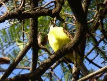 Mening van onderaan van een vogel Stock Afbeelding
