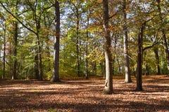 Mening van opheldering in het bos royalty-vrije stock afbeeldingen