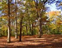 Mening van opheldering in het bos stock afbeeldingen