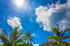 Mening van palmen tegen hemel Royalty-vrije Stock Afbeeldingen
