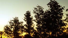 Mening van sommige bomen in een zonsondergang stock afbeeldingen
