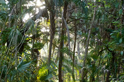 Mening van sub tropisch bos Royalty-vrije Stock Afbeeldingen