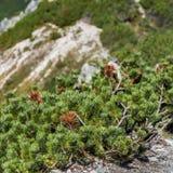 Mening van Tatra-Bergen van wandelingssleep polen europa Royalty-vrije Stock Afbeeldingen
