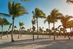 Mening van tropisch strand door kokosnotenpalmen op zonsondergang Schaduwen van palmvarenbladen die op geweven zand fladderen Stock Afbeeldingen
