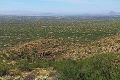 Mening van Tucson van Onderstel Lemmon royalty-vrije stock foto