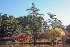 mening van tuin in de herfst in Japan stock foto
