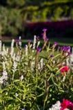 Mening van tuinen 2 Royalty-vrije Stock Foto's