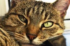 Mening van uw huisdierenkat het rusten Stock Foto