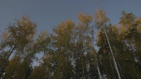 Mening van venster bewegende auto op wegweg door de herfstbos stock videobeelden