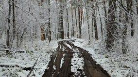 Mening van vuile weg in het de winterbos stock video