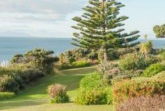 Mening van Whangaparaoa-Schiereiland met gras, bomen en struiken Royalty-vrije Stock Foto