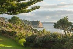 Mening van Whangaparaoa-Schiereiland met gras, bomen en struiken Royalty-vrije Stock Afbeelding