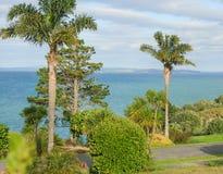 Mening van Whangaparaoa-Schiereiland met palmen en pijnbomen Stock Foto's