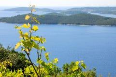 mening van wijnstok en de overzeese eilanden Stock Foto