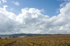 Mening van wijnstokken Stock Foto's