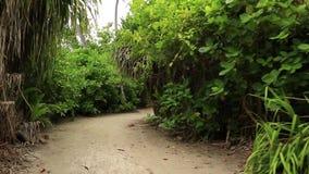 Mening van witte zandweg in groene tropische wildernis Groene palmen en groene installaties op grijze hemelachtergrond stock videobeelden