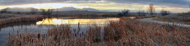 Meningen die van Josh's-Vijver het lopen weg, op Zonsondergang die in Broomfield Colorado wijzen door Cattails wordt omringd, v royalty-vrije stock afbeelding