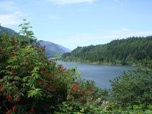 Meningen over de rivier van Colombia staat Oregon de V.S. Stock Fotografie