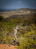 Meningen rond Curacao Caraïbisch eiland royalty-vrije stock afbeeldingen