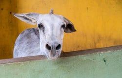 Meningen rond Phillips Animal Sanctuary stock afbeeldingen