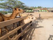 Meningen rond Phillips Animal Sanctuary royalty-vrije stock foto
