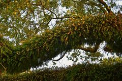 Meningen van bomen en unieke aardaspecten die New Orleans, met inbegrip van het wijzen van op pools in begraafplaatsen en het Tui royalty-vrije stock afbeelding