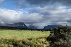 Meningen van de bergen en de installaties van Nieuw Zeeland D Y Stock Fotografie