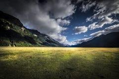 Meningen van de bergen en de installaties van Nieuw Zeeland D Y Royalty-vrije Stock Fotografie