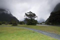 Meningen van de bergen en de installaties van Nieuw Zeeland D Y Royalty-vrije Stock Afbeeldingen