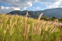 Meningen van de groene die heuvels met gras, blauwe hemel en witte wolken worden behandeld royalty-vrije stock foto's