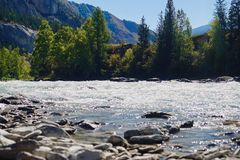 Meningen van de Turkooise Katun-rivier en de Altai-bergen, Rusland stock foto's