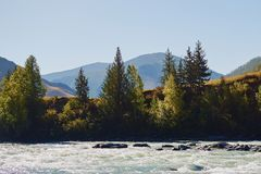 Meningen van de Turkooise Katun-rivier en de Altai-bergen, Rusland stock afbeelding