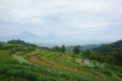 meningen van groene padievelden op de heuvel stock fotografie