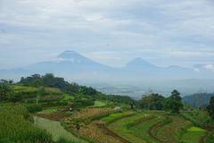 meningen van groene padievelden op de heuvel royalty-vrije stock afbeeldingen