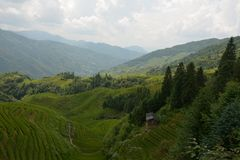 Meningen van groene terrasvormige gebieden, de Backbone China van de Draak stock fotografie