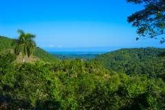 Meningen van het tropische bos met palmen en duidelijke blauwe hemel Stock Afbeeldingen