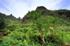 Meningen van Limahuli-tuinen, het eiland van Kauai Royalty-vrije Stock Afbeelding
