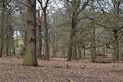 Meningen van Richmond Park stock fotografie