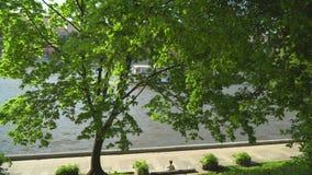 Meningen van rivierschepen die langs de stads` s dijk varen stock video
