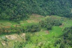 meningen van terrasvormige padievelden stock foto