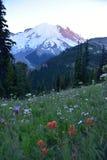 Meningen van Zonsopgang: Tahoma & Castilleja-soorten Zet Rainier National Park, Cascadebergen, Vreedzaam Noordwesten, Washington  Stock Foto