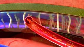 meninges διανυσματική απεικόνιση