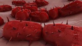 Meningitis bacteriana libre illustration