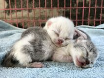 Menings dierlijke kat Stock Foto