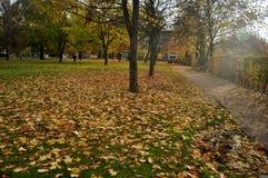 Meningslandschap van tuin en openbaar park in seizoengebonden de herfst Stock Foto